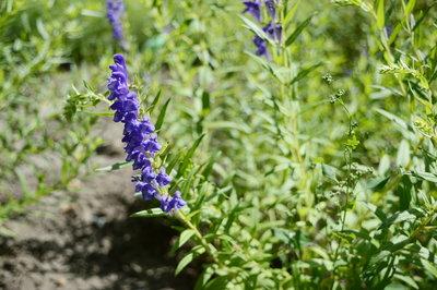 alergia na zioła - objawy