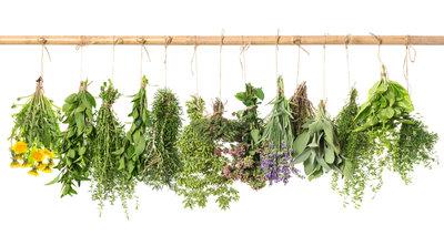 alergia na zioła - przyczyny