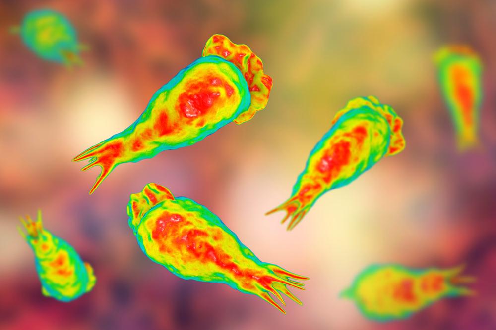 zakażenie pasożytami - jak uniknąć